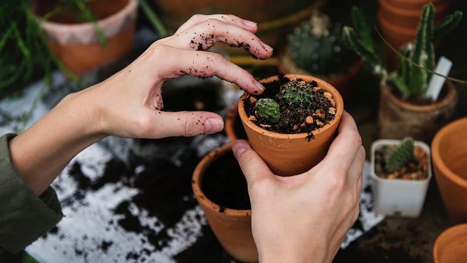 Piffa upp balkongen eller terrassen med växter